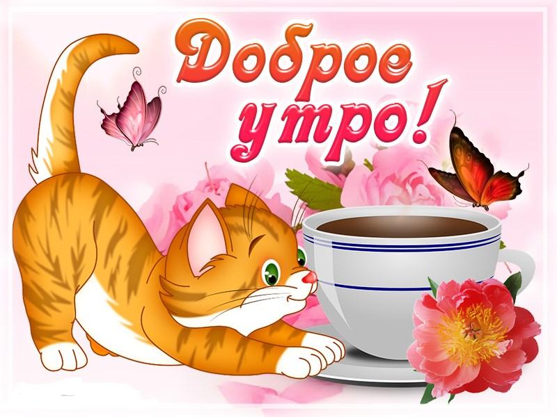Красивые открытки доброе утро с котятами
